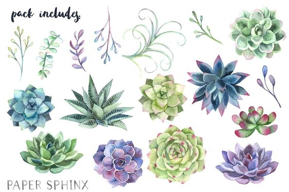 Papersphinx succulents 2